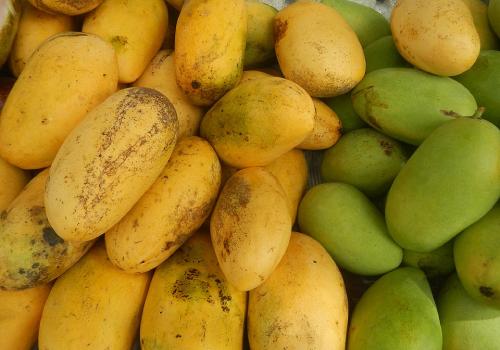carabao mango of philippines