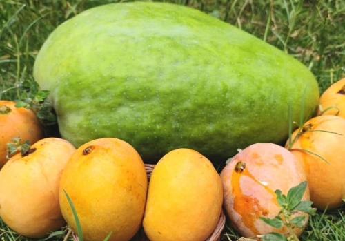 nur jahan mango