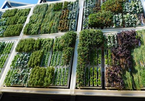 vertical garden growing methods