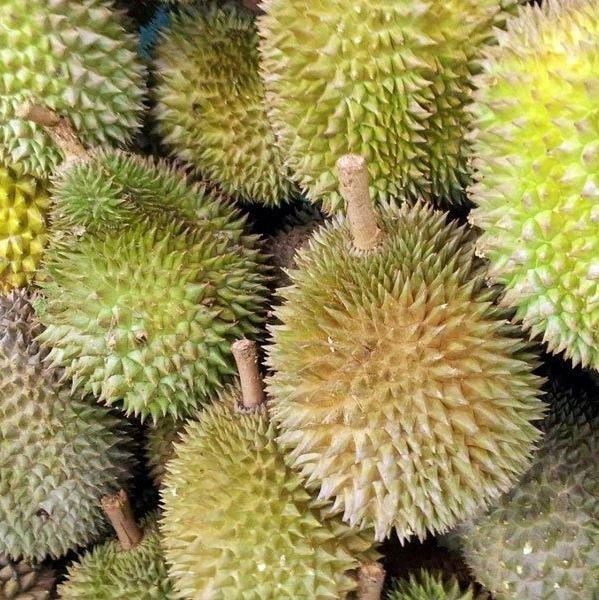 red prawn durian