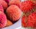 characteristics of lychee and rambutan