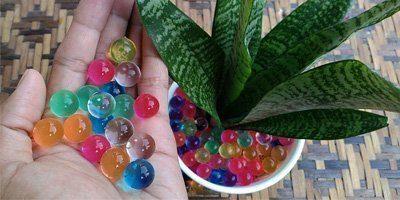 water-balls-plants